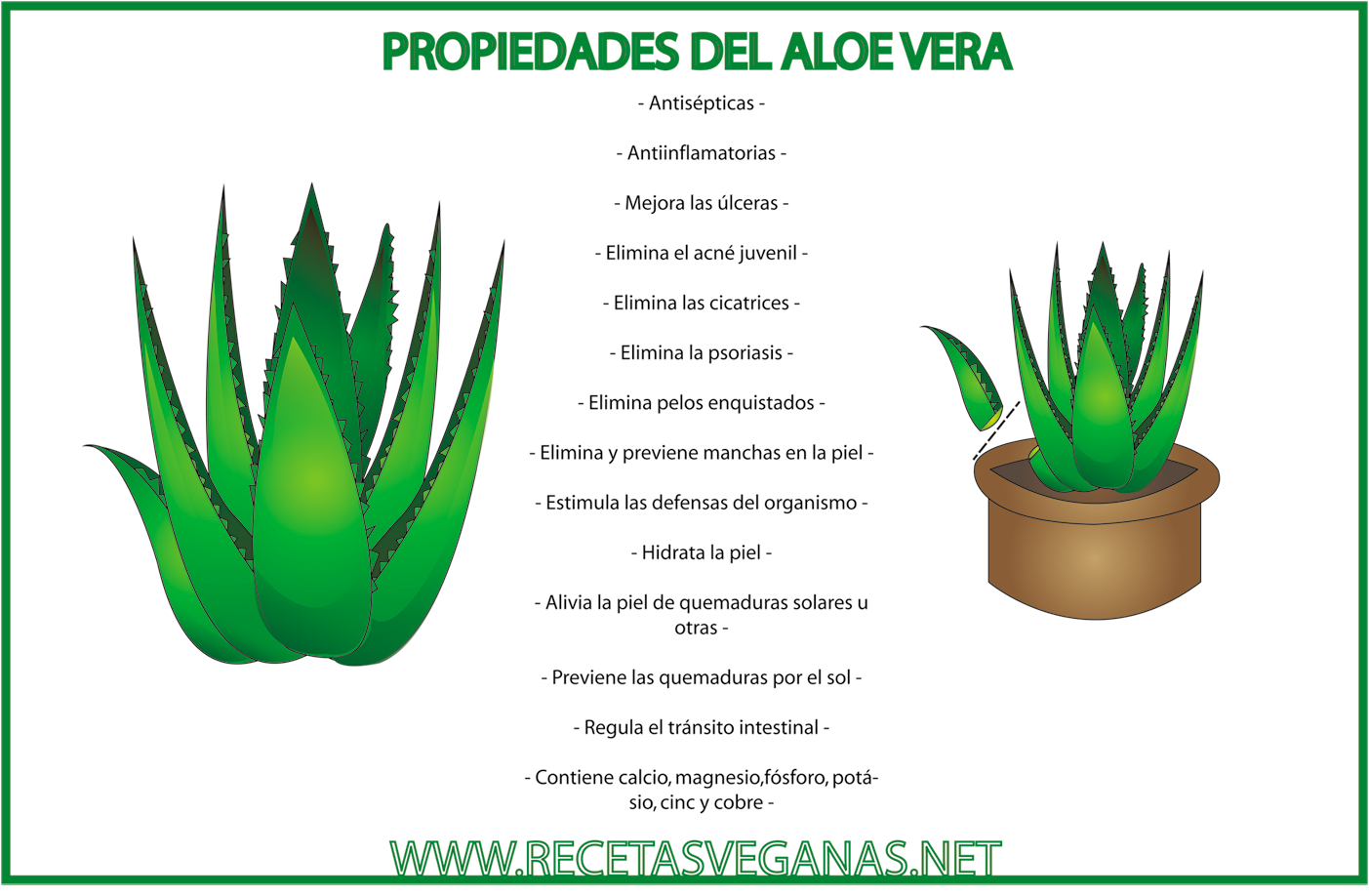 Pin Sabila La Planta Milagrosa on Pinterest