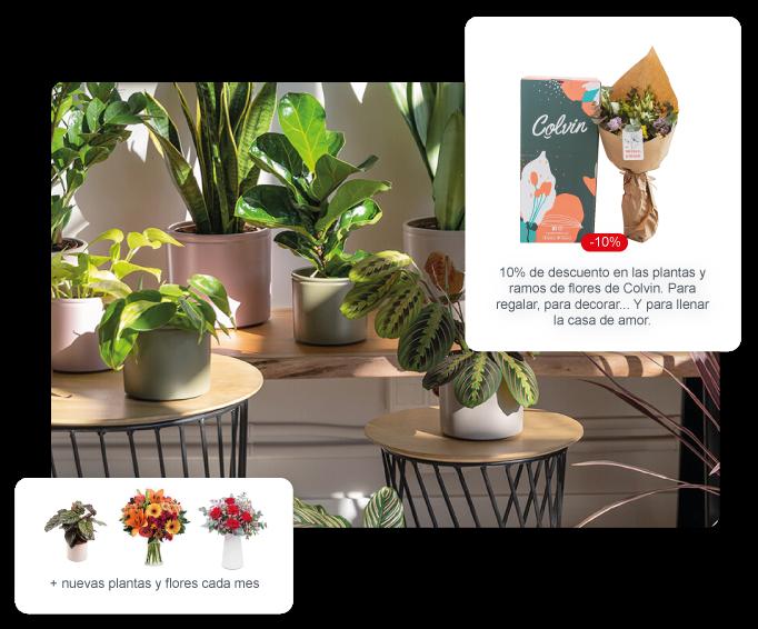 Código de descuento en Colvin: tienda online de plantas y ramos de flores