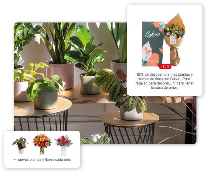 codigo-descuento-flores-plantas-colvin15